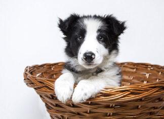 wyprawka dla psów